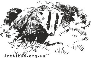 Clipart badger
