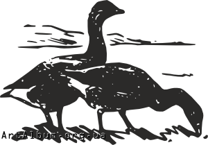 Clipart geese
