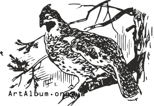 Clipart grouse