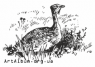 Clipart great bustard