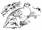 Clipart white (snow) ptarmigan