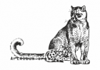 Clipart florida puma with a baby