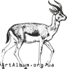 Clipart goitered gazelle