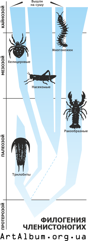 Clipart phylogeny of arthropod in russian