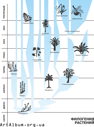 Clipart phylogeny of plants in russian