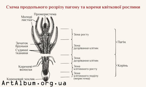 Clipart shoot structure in ukrainian